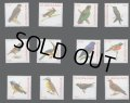 スリナム切手 2003年 鳥 アカハラハヤブサ   エリアカフウキンチョウ   12種